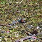 Un jeune enfant nage dans les débris après une tempête tropicale à Manille