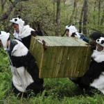 Un panda remis en liberté dans une réserve du sud de la Chine